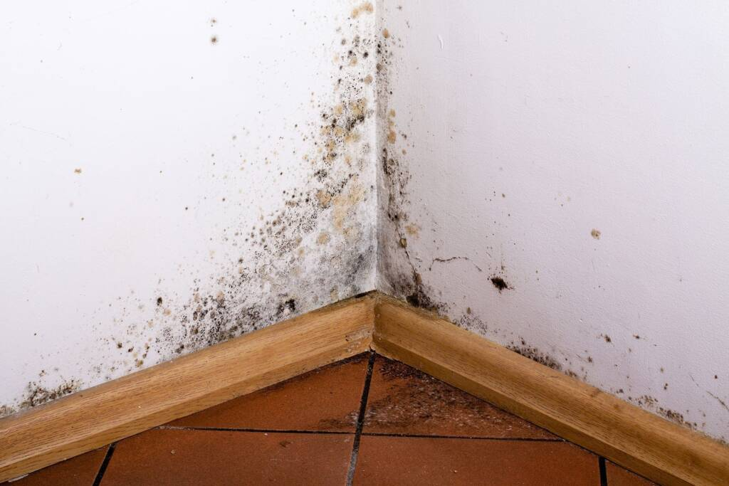 mold damage repair in Leawood KS mold testing