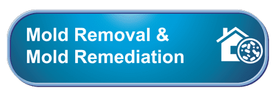 Mold Removal & Mold Remediation in Kansas City MO